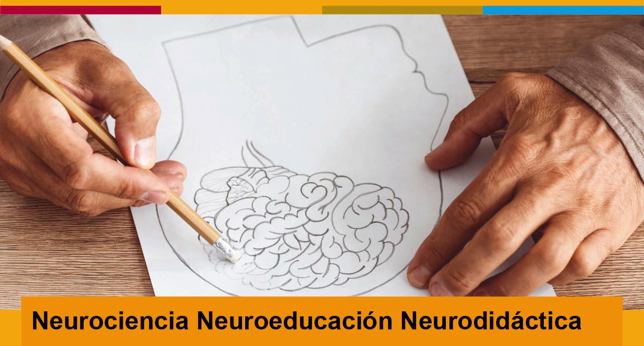 Neurociencia, Neuroeducación, Neurodidáctica